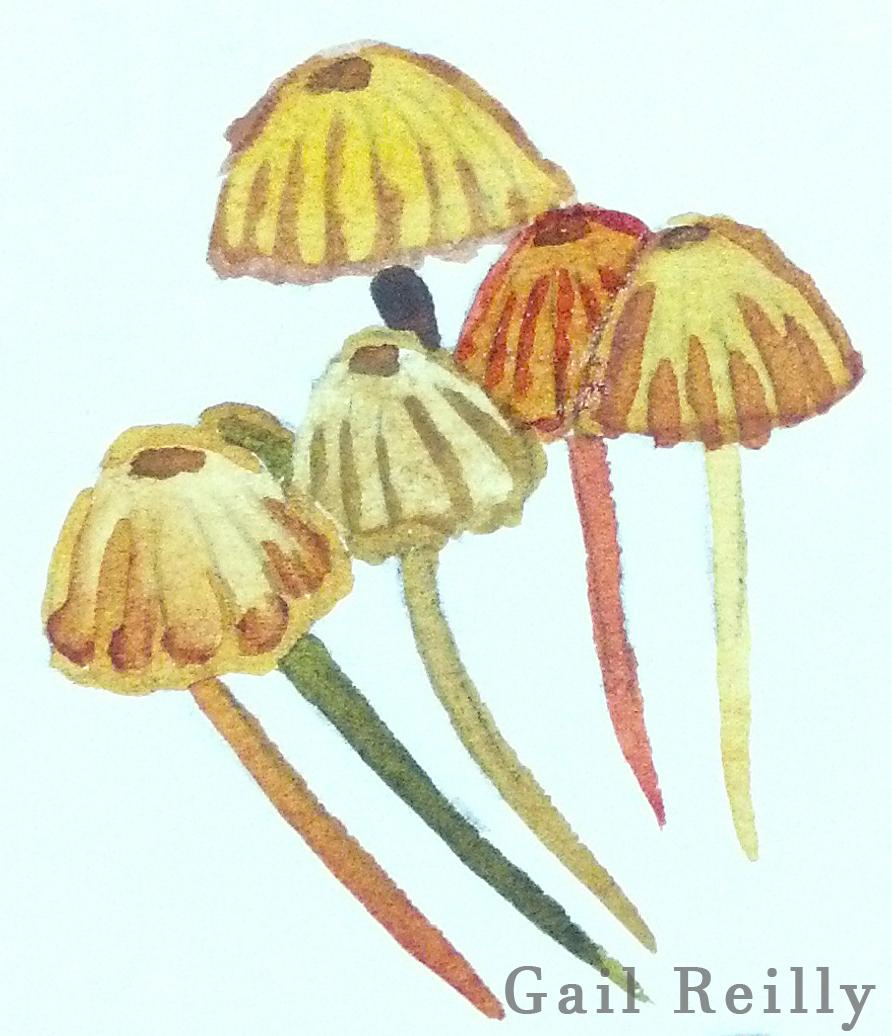 Gail Reilly Mushrooms