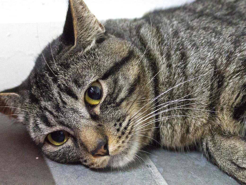 gilbert_cat.jpg