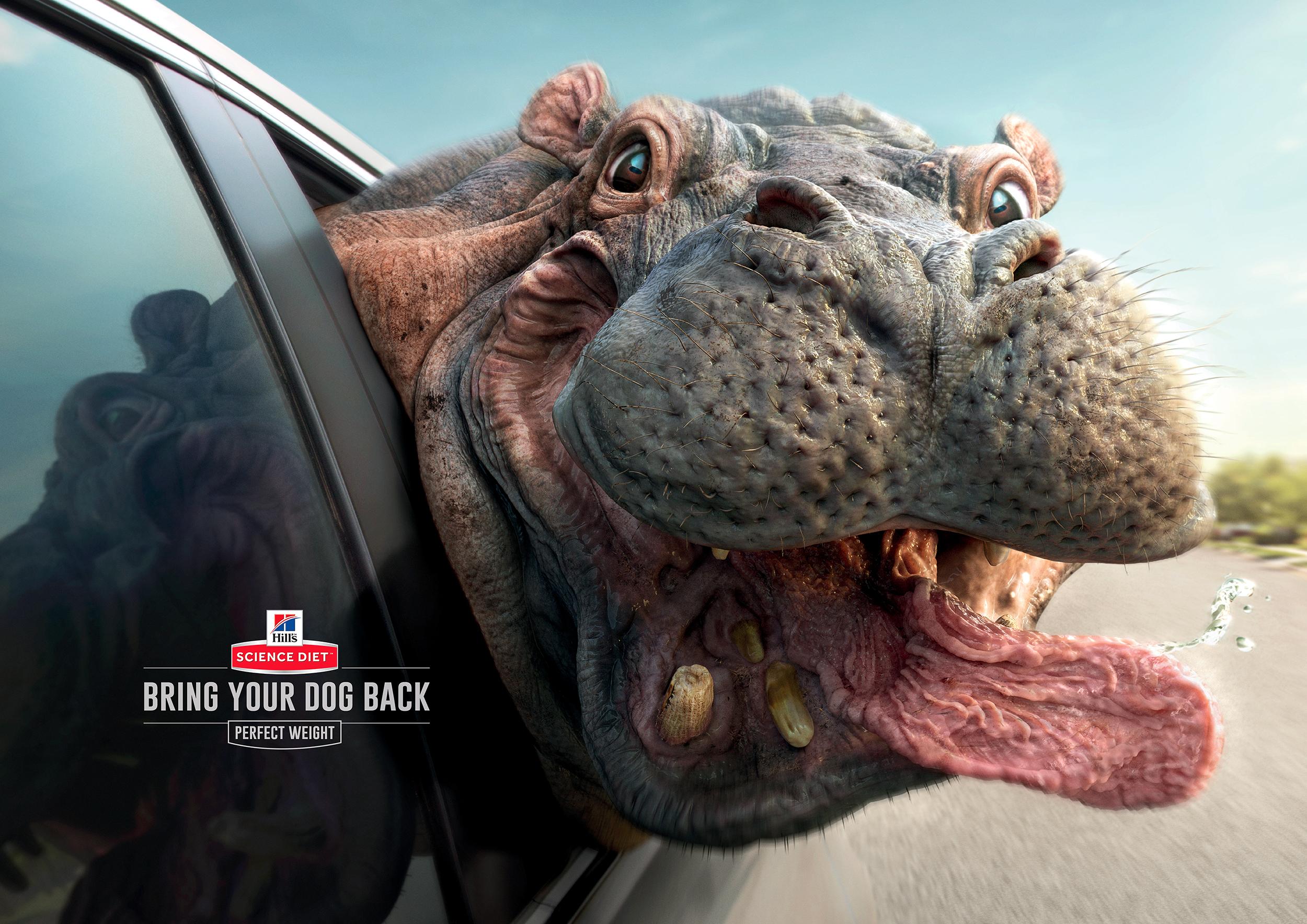 Bring Your Pet Back  Red Fuse Communication Hong Kong
