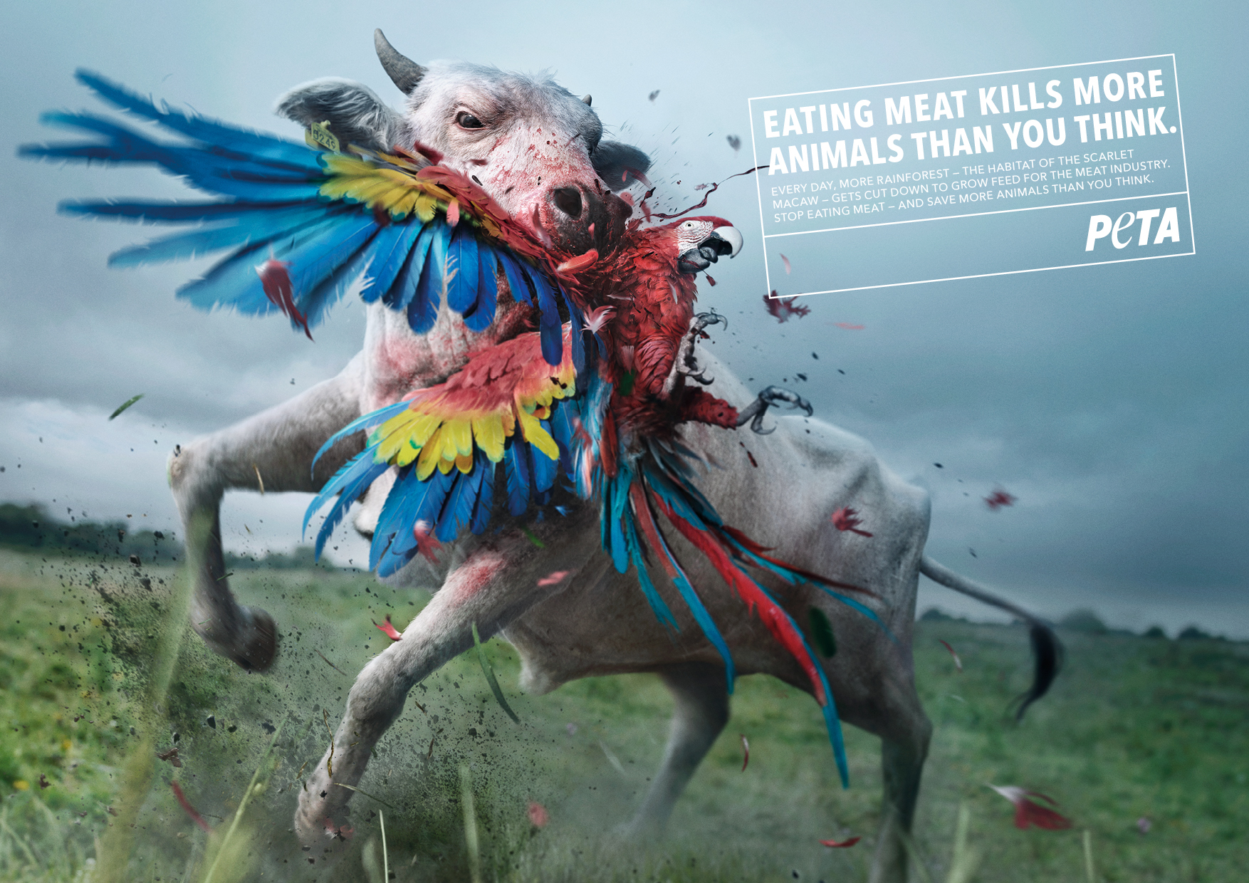 PETA_AZ_KillerCow_MACAW_210x297_EN_190123.jpg