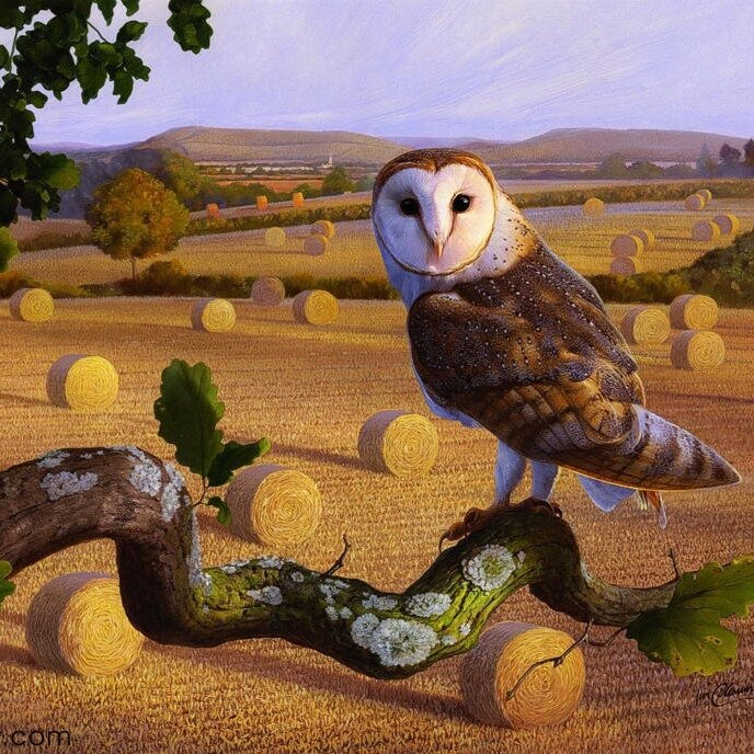 Products-Birds-Barn-Owl-By-Ian-Coleman.jpg