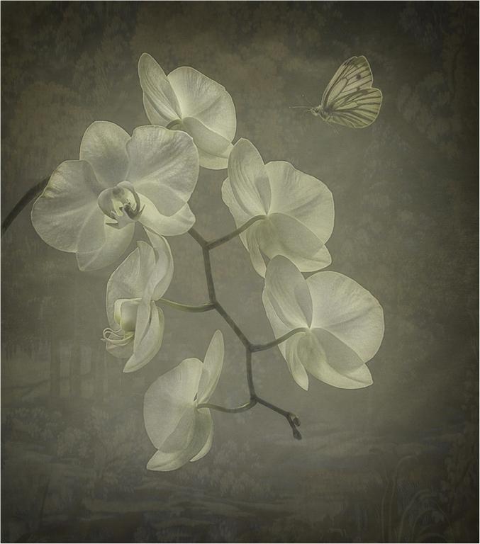 241_Natural Beauty_Fay Bowles  ARPS