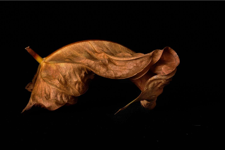 Light Painting © Brian Adkins