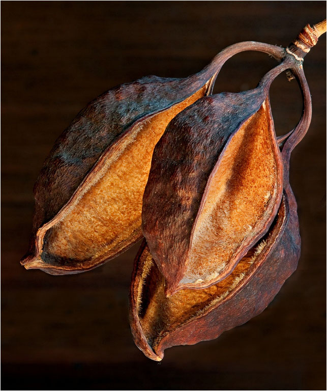 Spent Seed Pods ©Brian Adkins