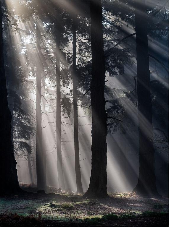 Sun's Rays  Bolderwood © Elaine Adkins