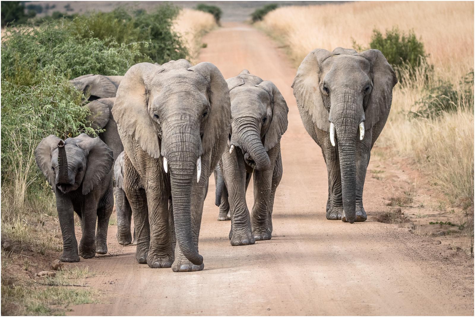 Marching Onwards © Frank Leavesley NCFE3.jpg