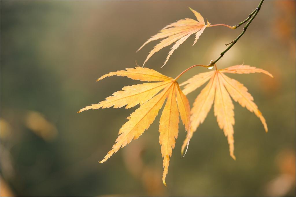 Autumn Leaves © Helen Renouf