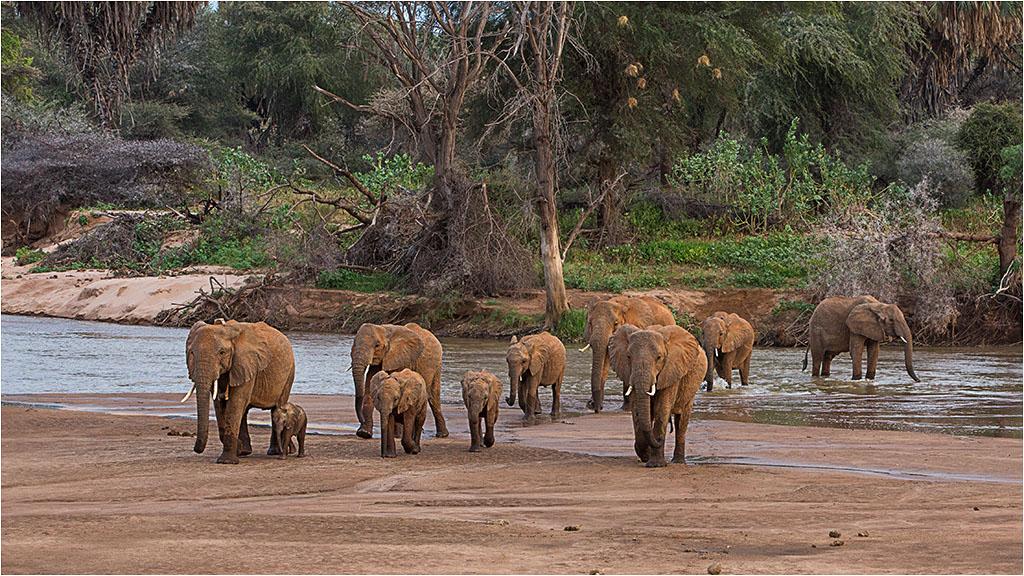 ELEPHANT FAMILY CROSSING THE RIVER © Ian Francis ARPS DPAGB