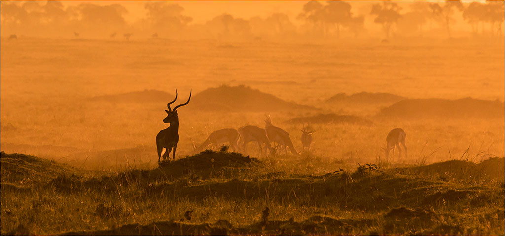 MASAI MARA EARLY MORNING © Ian Francis ARPS DPAGB