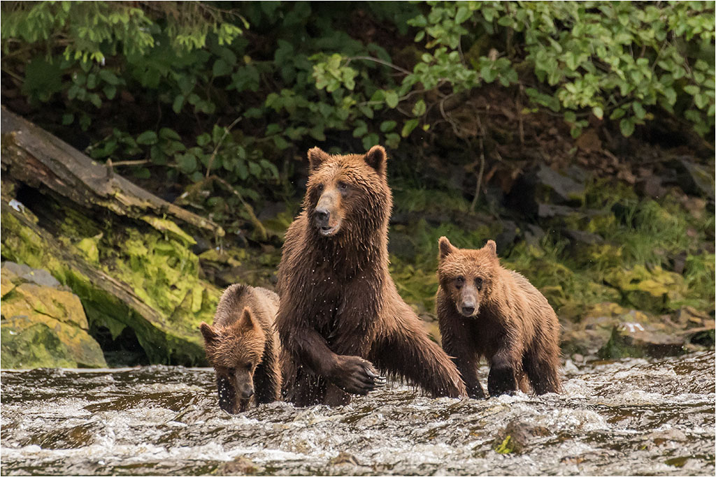 MOTHER AND CUBS © Ian Francis ARPS DPAGB