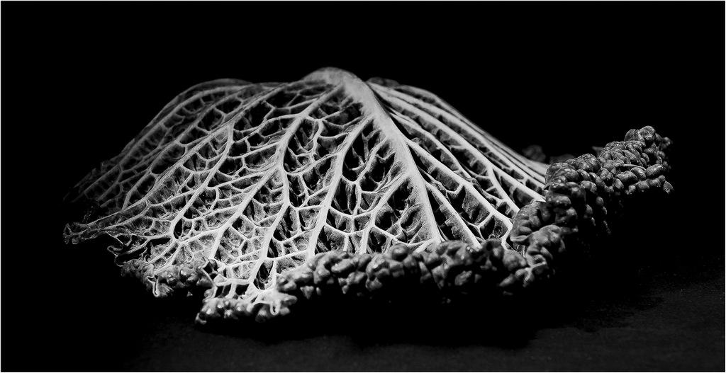 Savoy Leaf © Vicky Bath