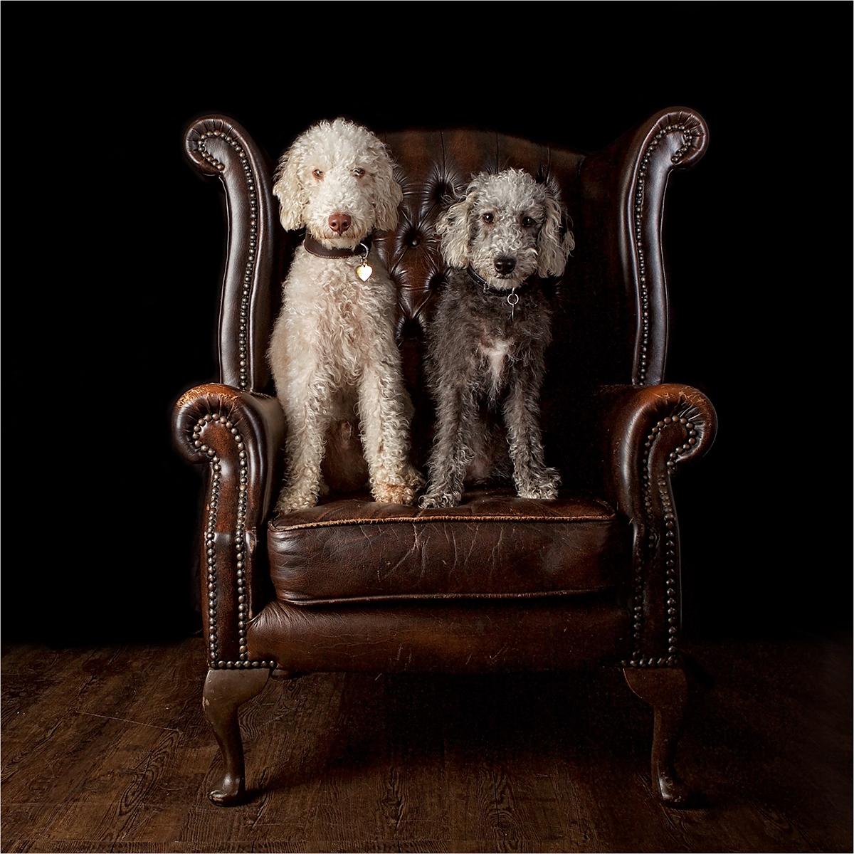 Barney and Bertie © Catherine Dashwood