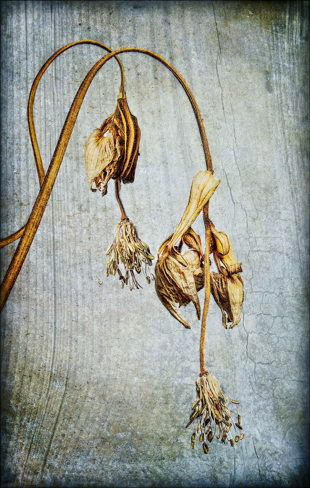 Aged Seed Heads © Fay Bowles ARPS