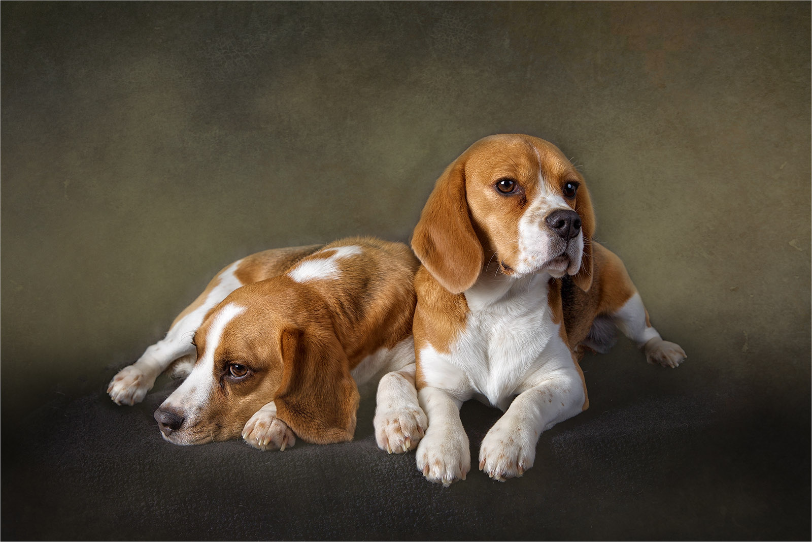 Luna and Buddy © Catherine Dashwood