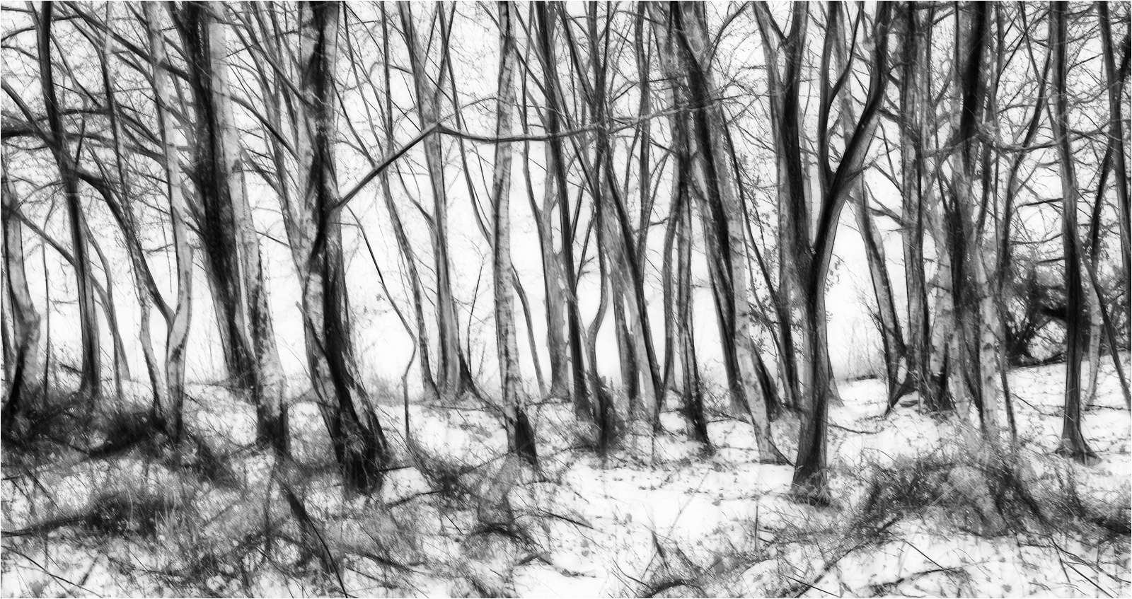 241_Siver Birches in Snow_Fay Bowles ARPS.jpg