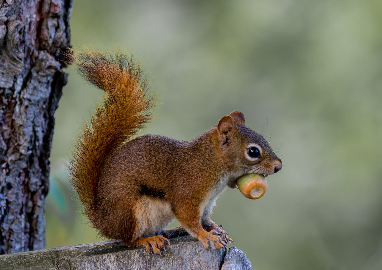 340 Posing with nut pdi.jpg