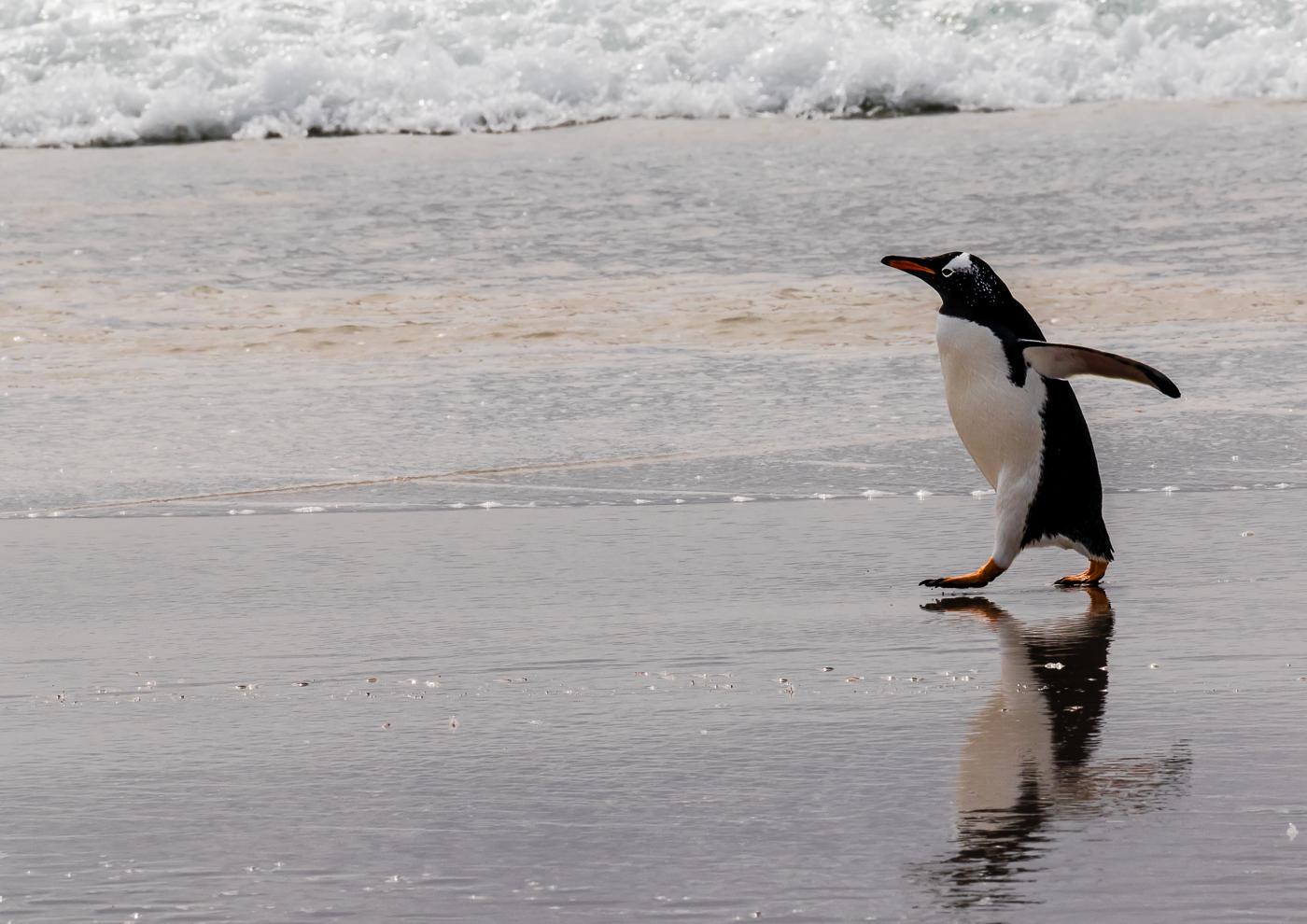 Purposeful  Penguin pdi.jpg