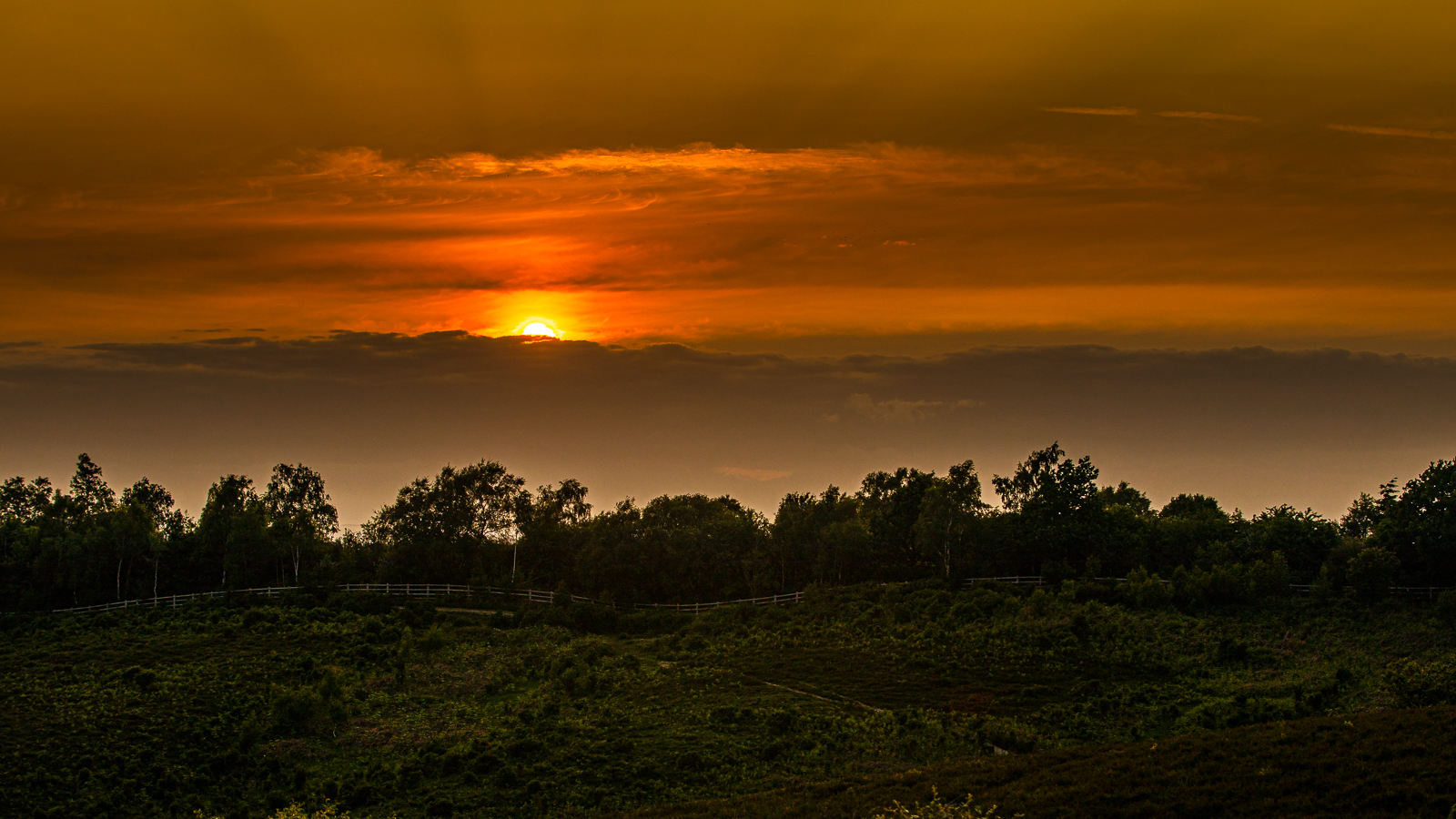 Sunset over the New Forest pdi.jpg