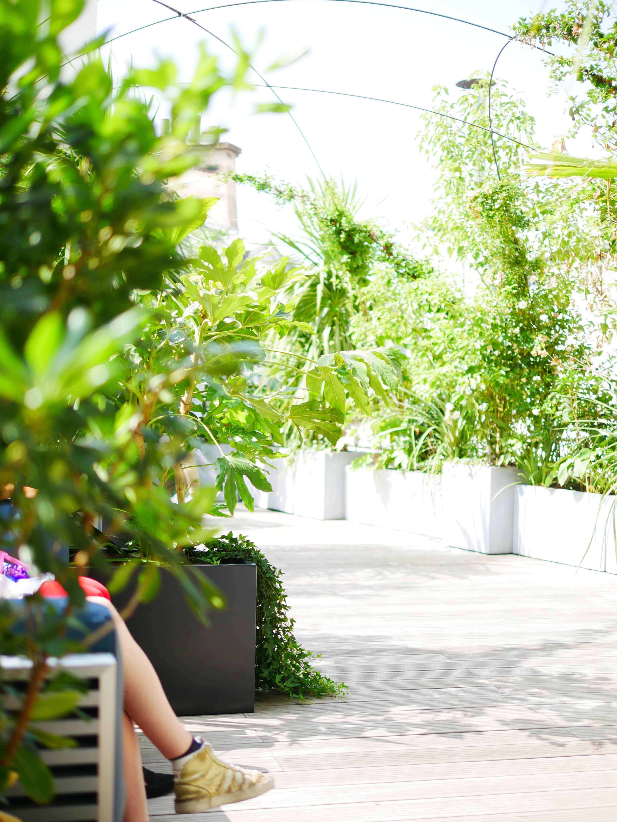 kwerk_haussmann_coworking_paris_terrasses_jardins_outdoor_garden_christophe_gautrand_paysagiste_5.jpg