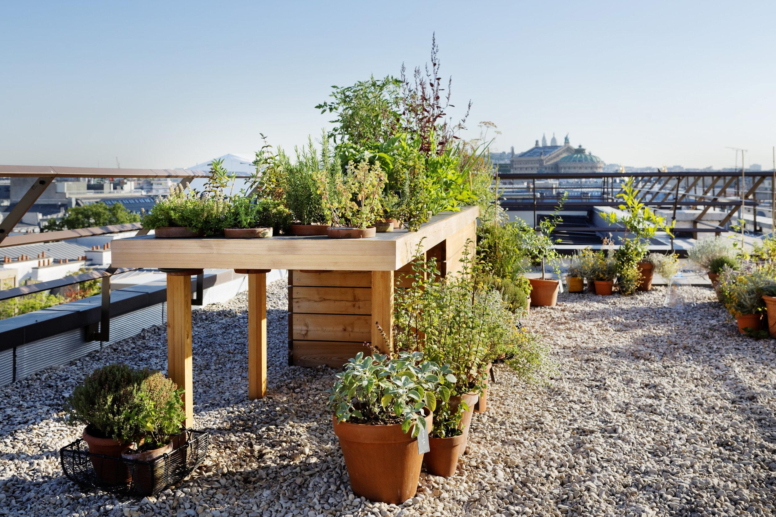 hotel_mandarin_oriental_paris_terraces_gardens_vegetable_garden_thierry_marx_christophe_gautrand_landscape_outdoor_designer_2.jpg