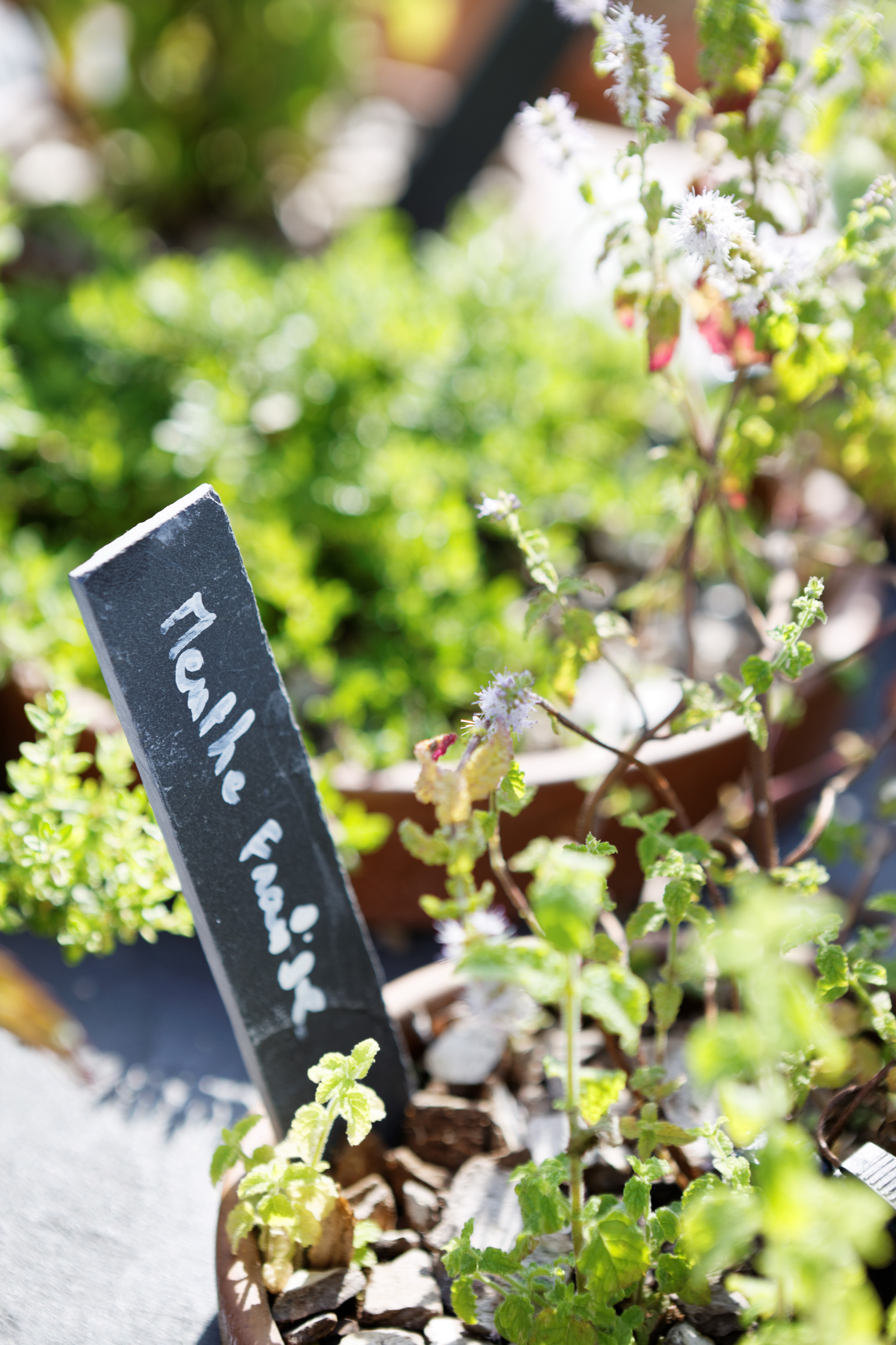 hotel_mandarin_oriental_paris_terraces_gardens_vegetable_garden_thierry_marx_christophe_gautrand_landscape_outdoor_designer_4.jpg