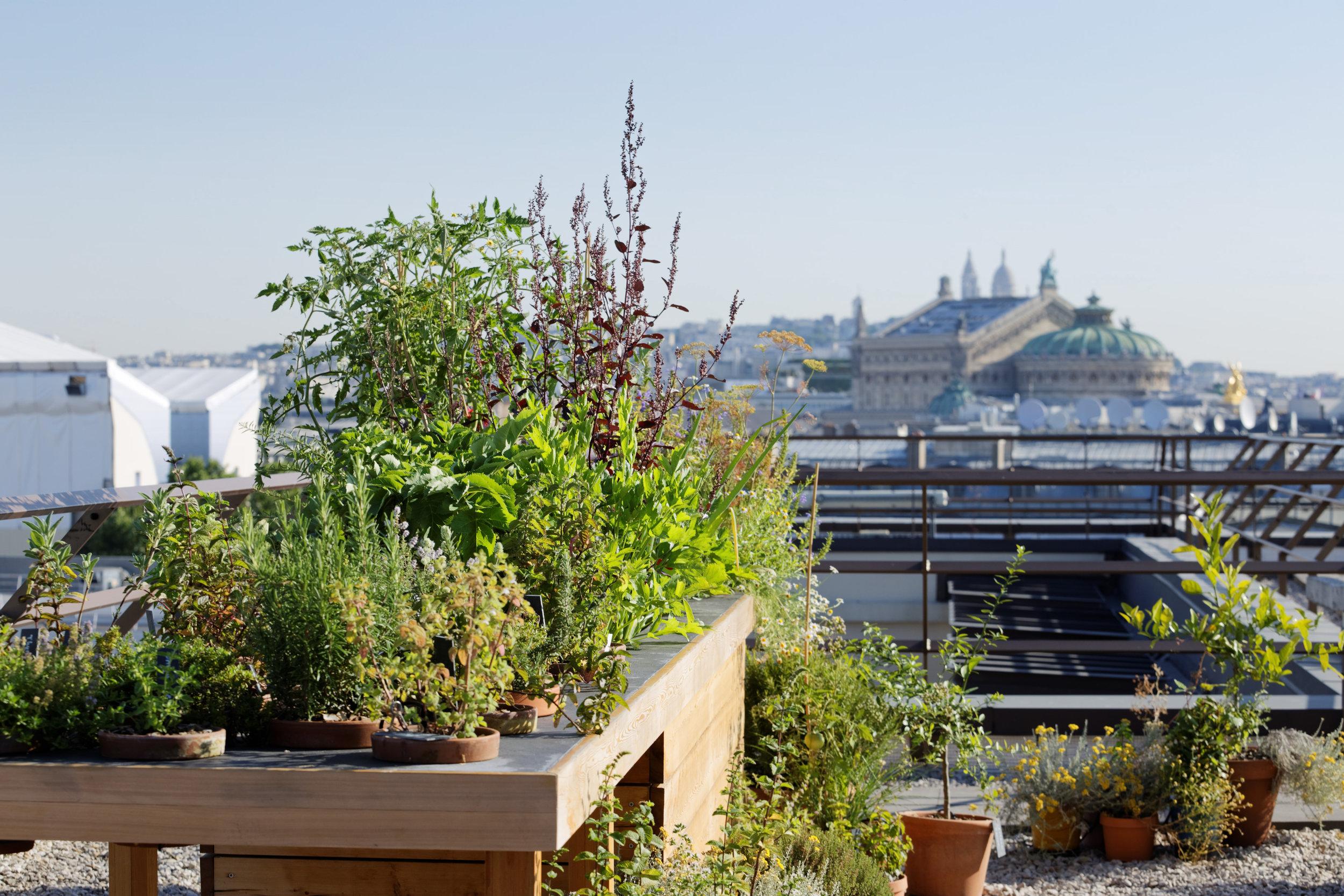 hotel_mandarin_oriental_paris_terraces_gardens_vegetable_garden_thierry_marx_christophe_gautrand_landscape_outdoor_designer_8.jpg