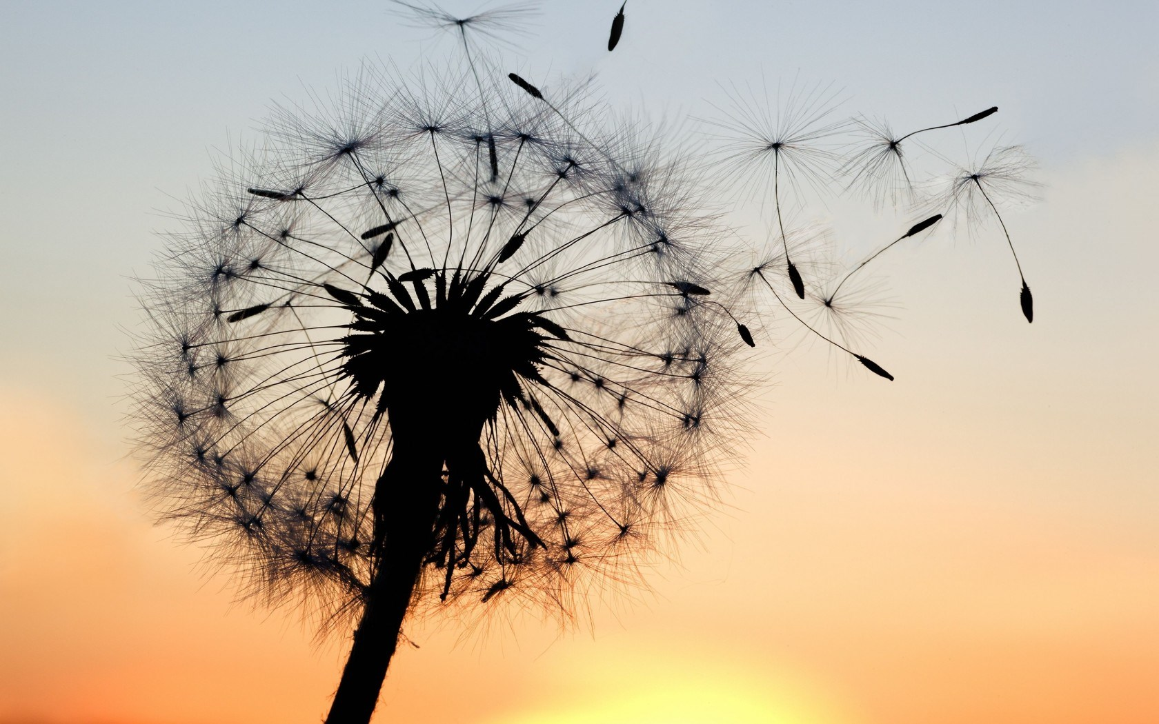 6785757-dandelion-wallpaper.jpg
