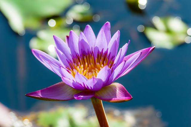 flower-3645182_640.jpg