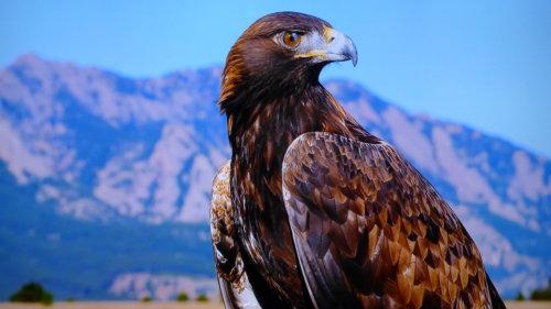 eagle 96.jpg