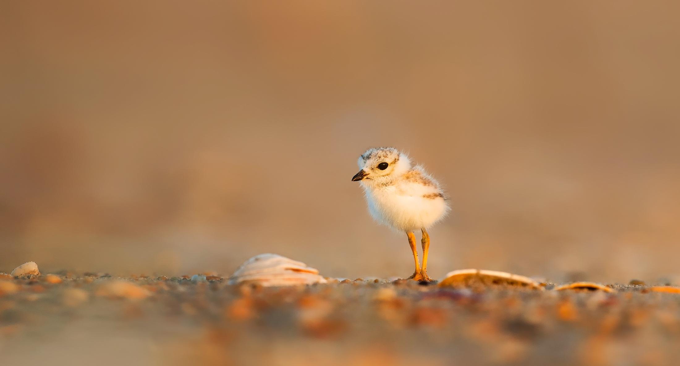 bird-1835615.jpg