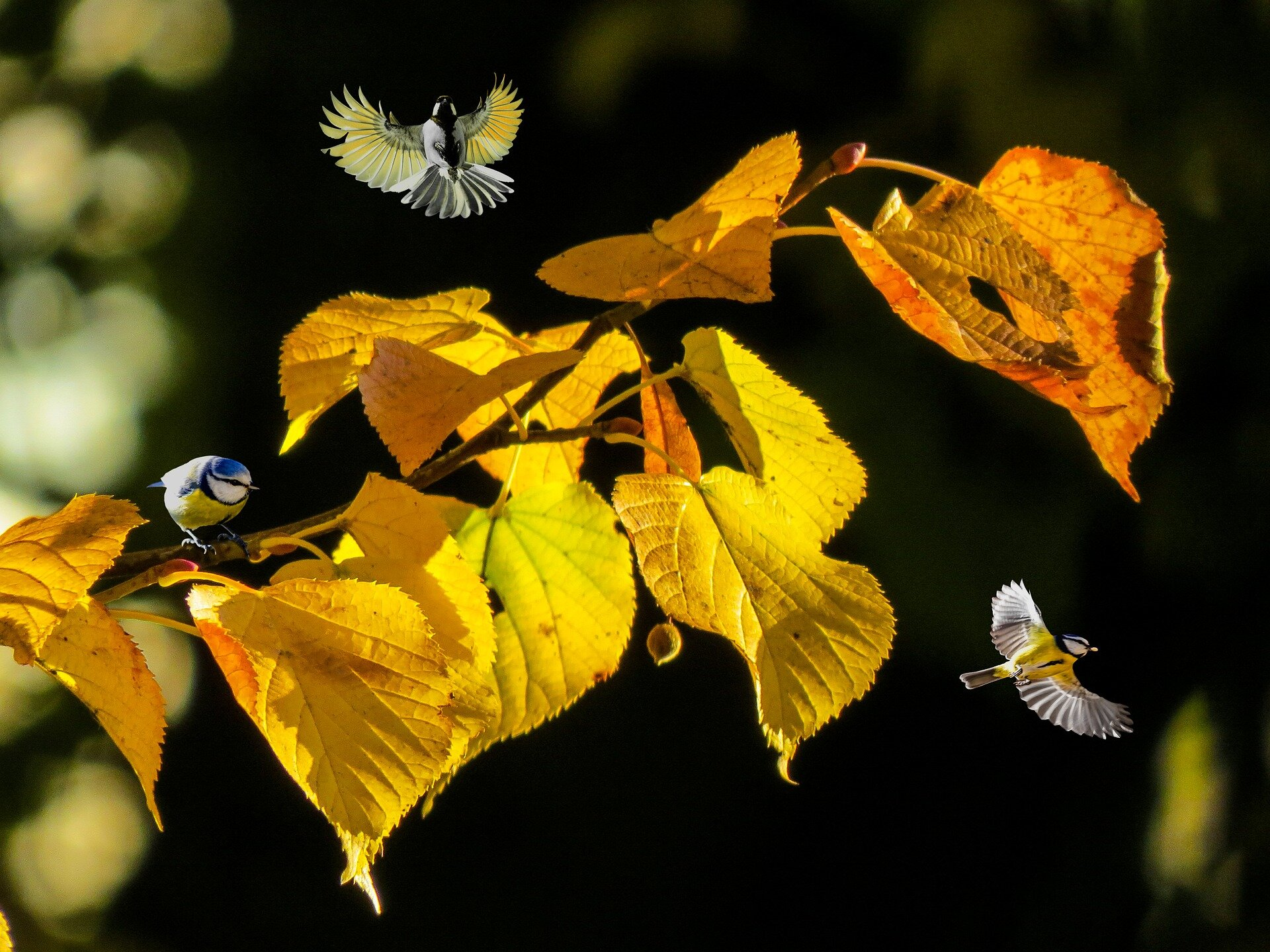 nature-4551933_1920.jpg