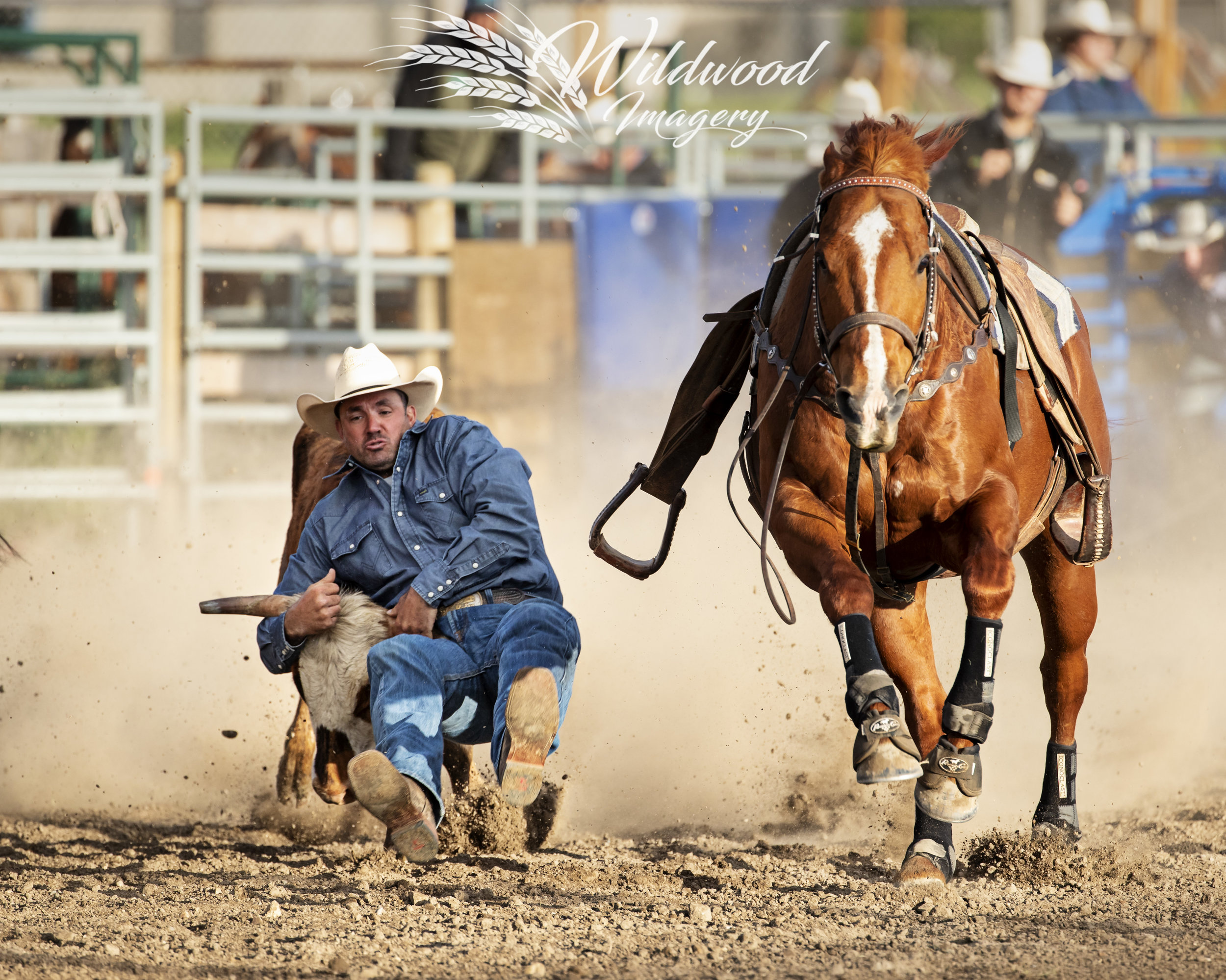 Trace Nicholson competing at the Slack - Couttsgrass Rodeo in Coutts, Alberta, Canada on June 15, 2018. Photo taken by Wildwood Imagery / Chantelle Bowman.