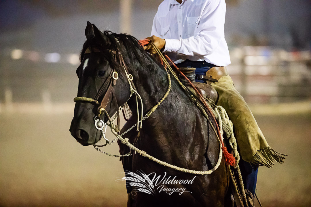 competing at the Havre Rodeo - Thursday Perf in Havre, Montana, United States on July 19, 2018. Photo taken by Wildwood Imagery / Chantelle Bowman.