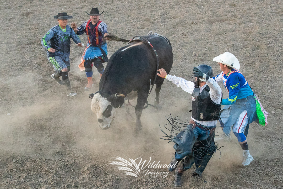 competing at the Havre Rodeo - Bull Riding Event in Havre, Montana, United States on July 20, 2018. Photo taken by Wildwood Imagery / Chantelle Bowman.