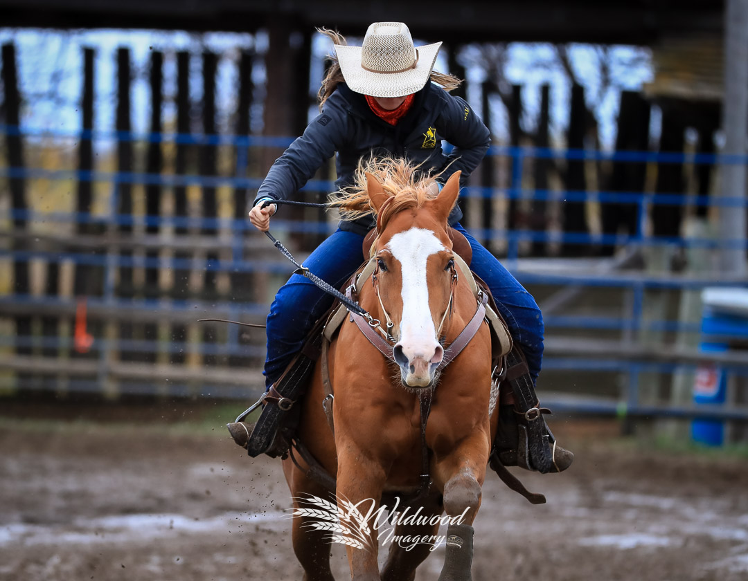 competing at the U of S CR Sat Perf in Martensville, Saskatchewan, Canada on September 22, 2018. Photo taken by Wildwood Imagery / Chantelle Bowman.