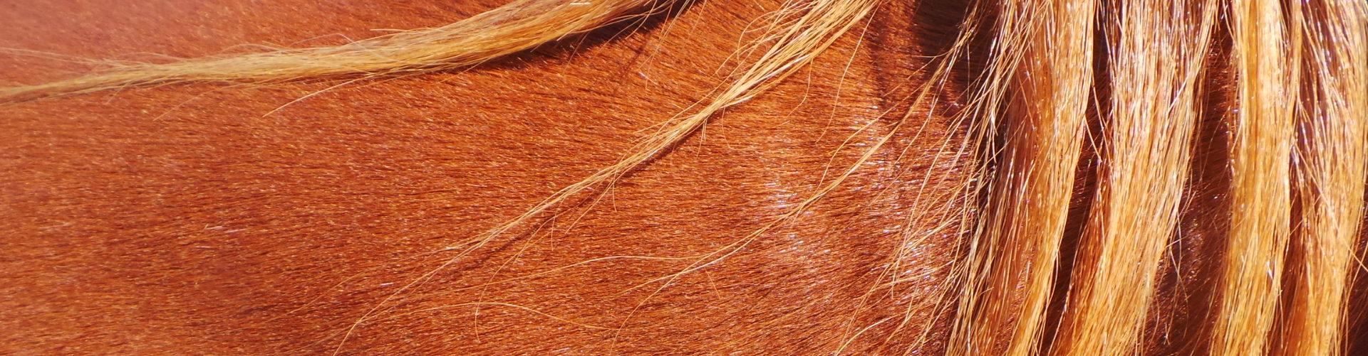 Flank paardners