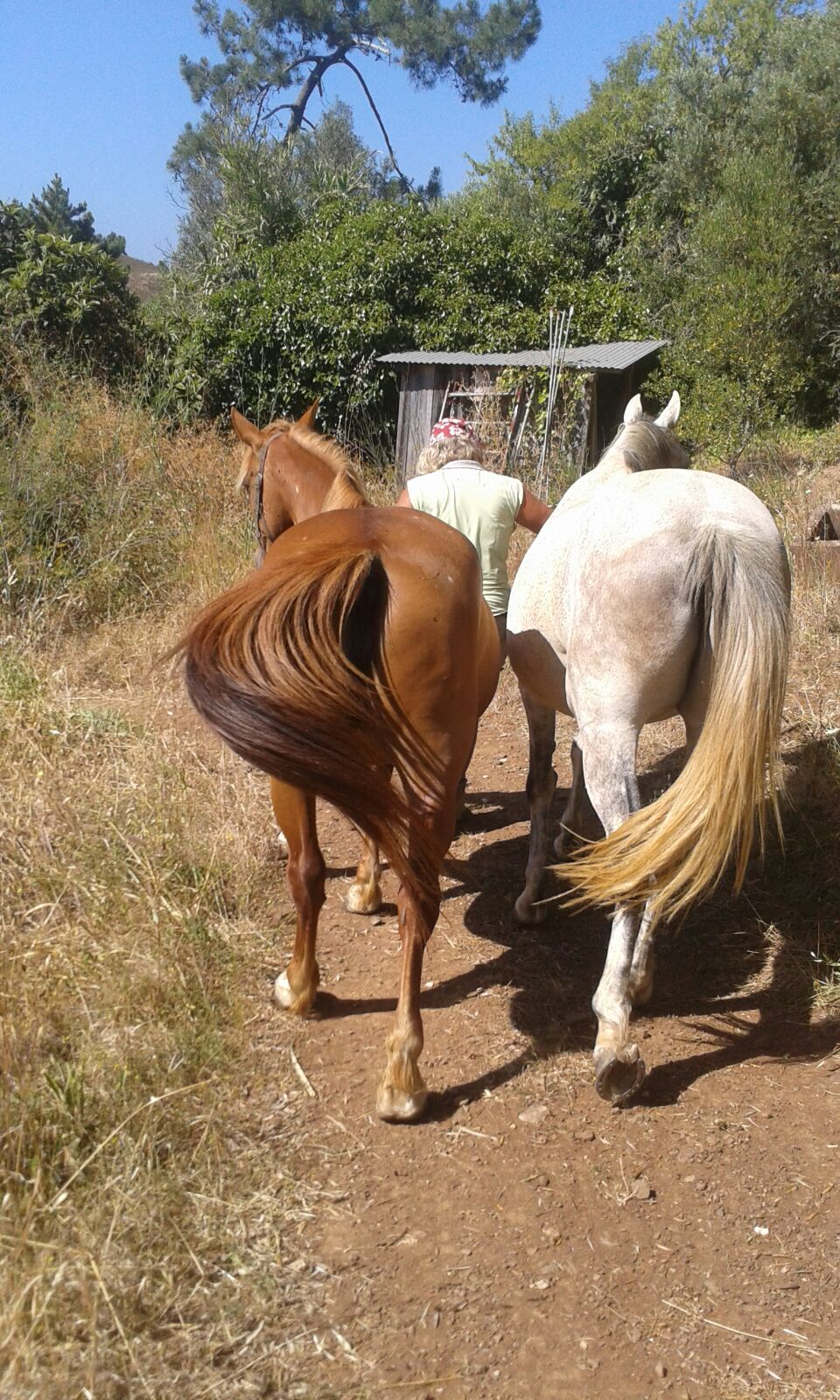 paardenbillen.jpg