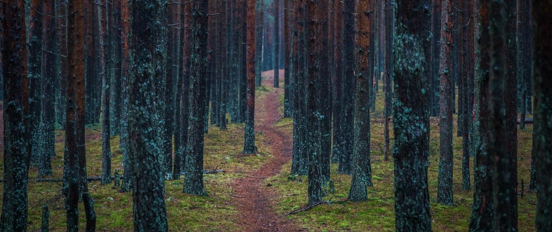 color-conifer-dawn-753550.jpg