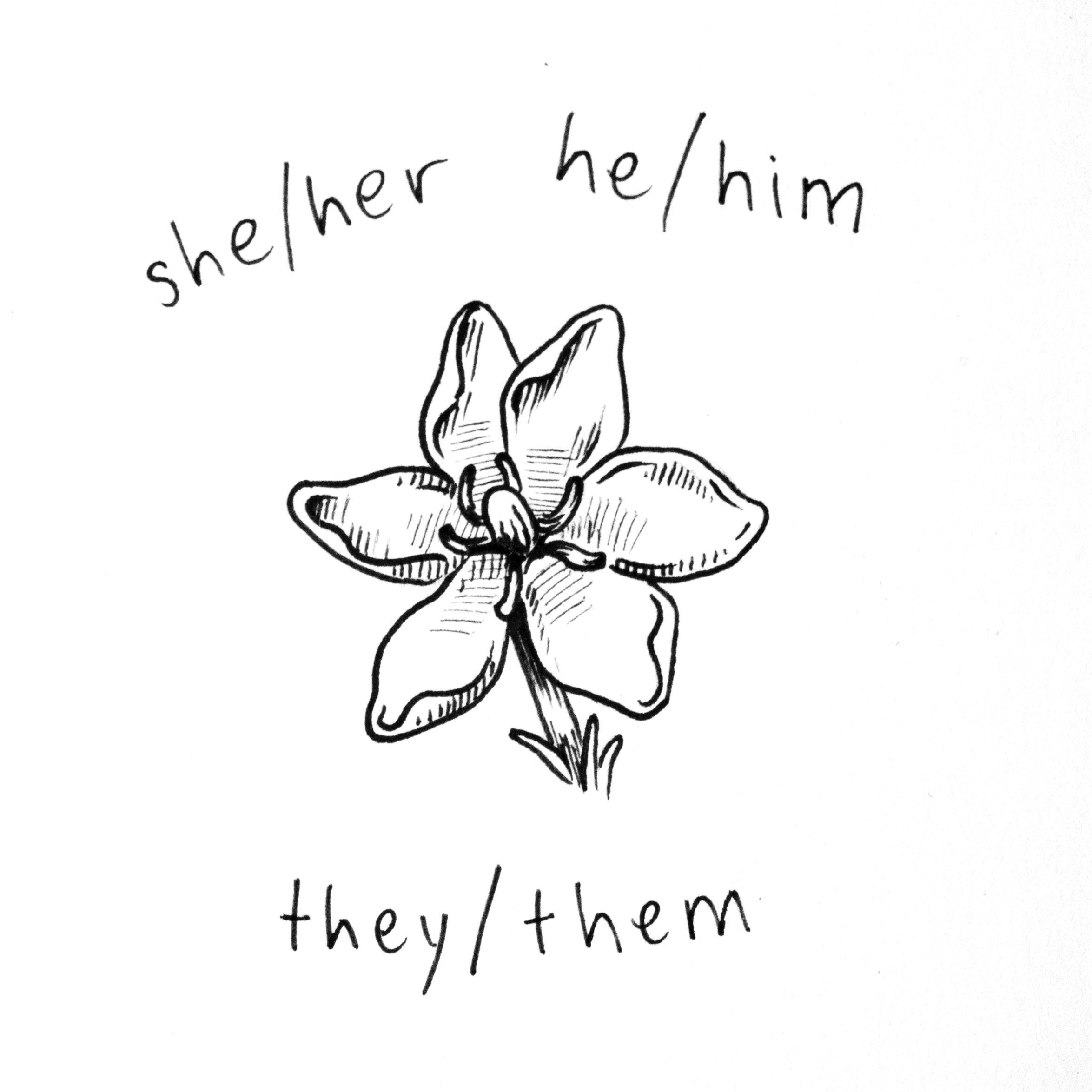 she_he_they2.jpg