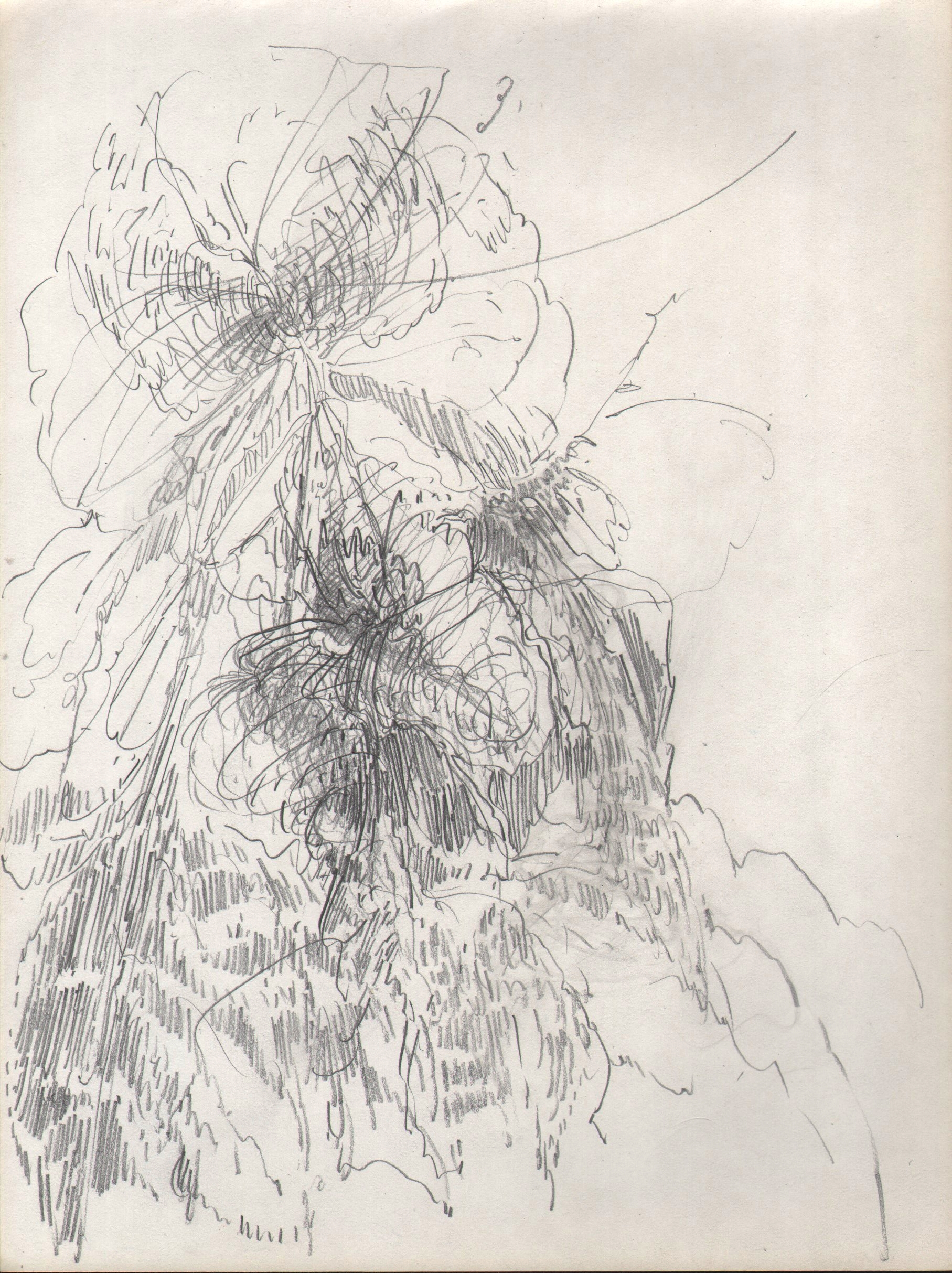 Live Action, Flower and Bug, 2015, 8 x 6 inches, pencil on paper
