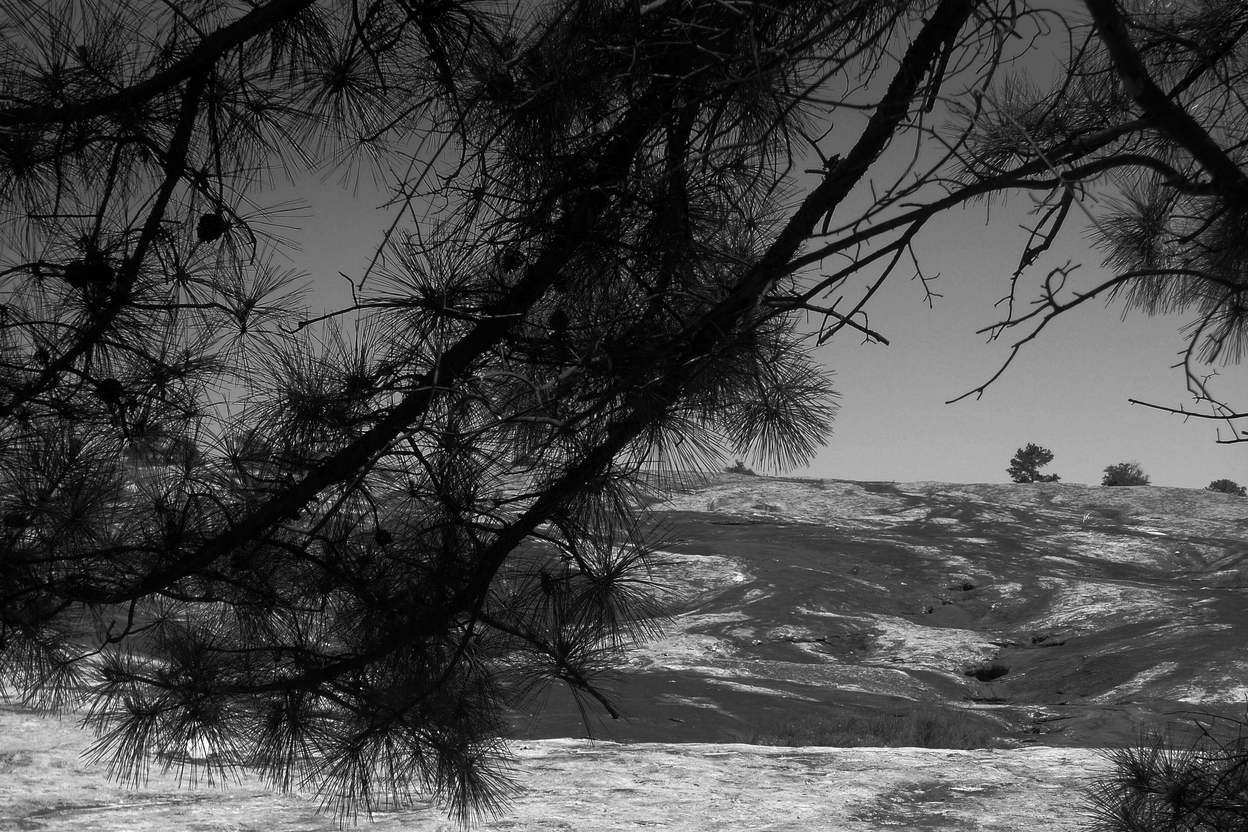 Arabia Mountain (11).JPG