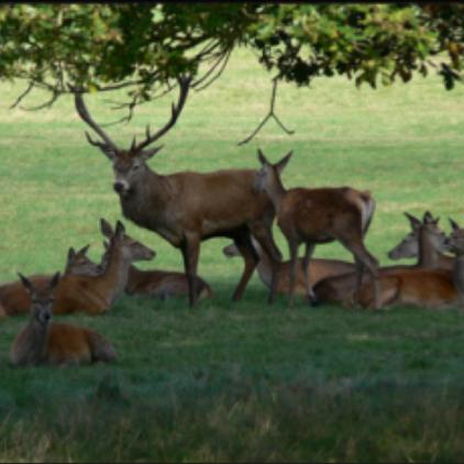 deers 1.png