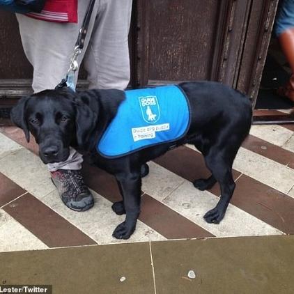 Guide dog.jpg