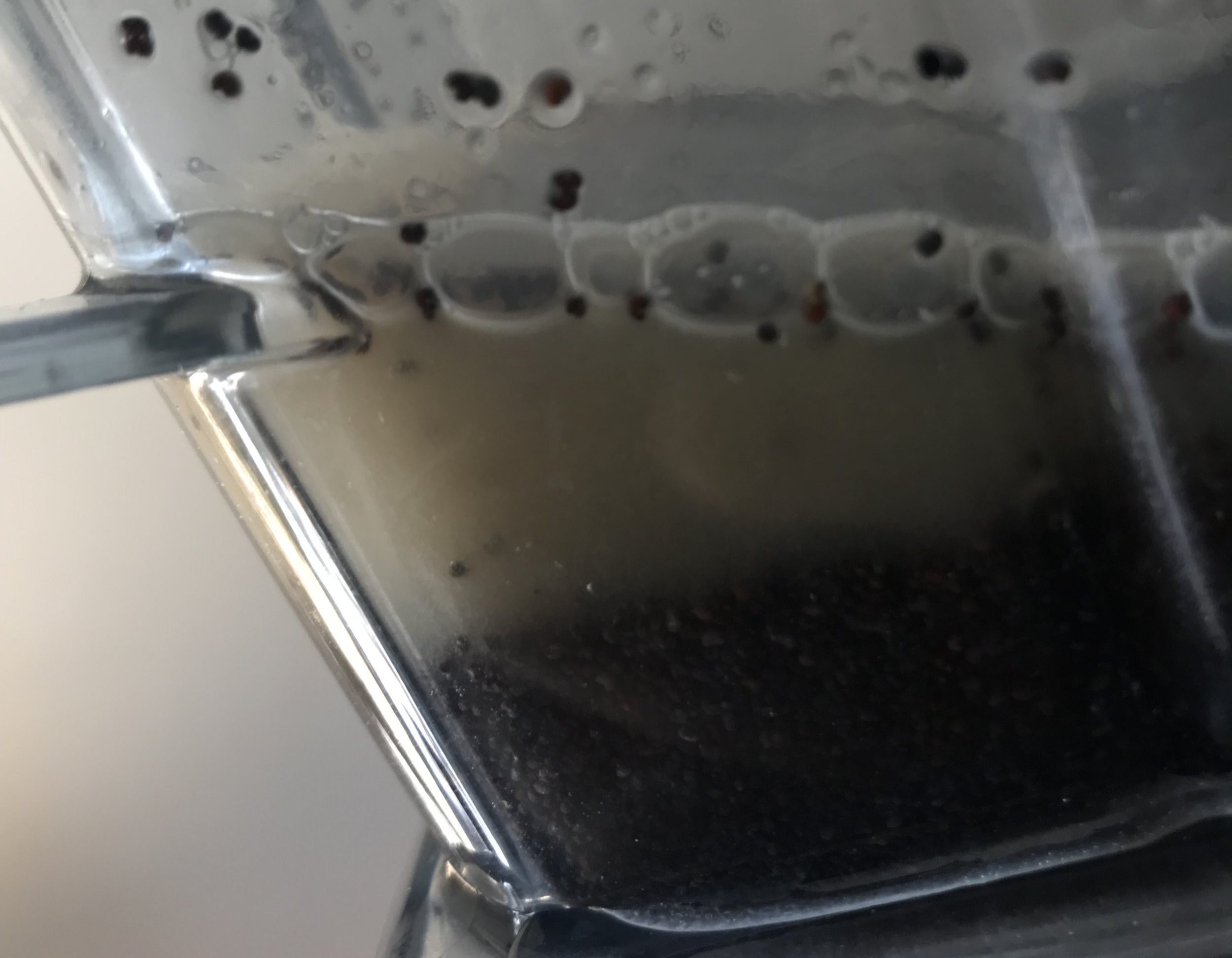 Poppy seeds in blender