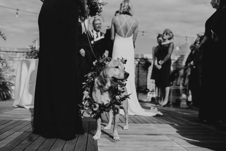44_The Penthouse - Pat Cori Photography - Virginia Wedding Photographer-92_Wedding_Ceremony_PatCoriPhotography_roanoke_rooftop_thepenthouse.jpg