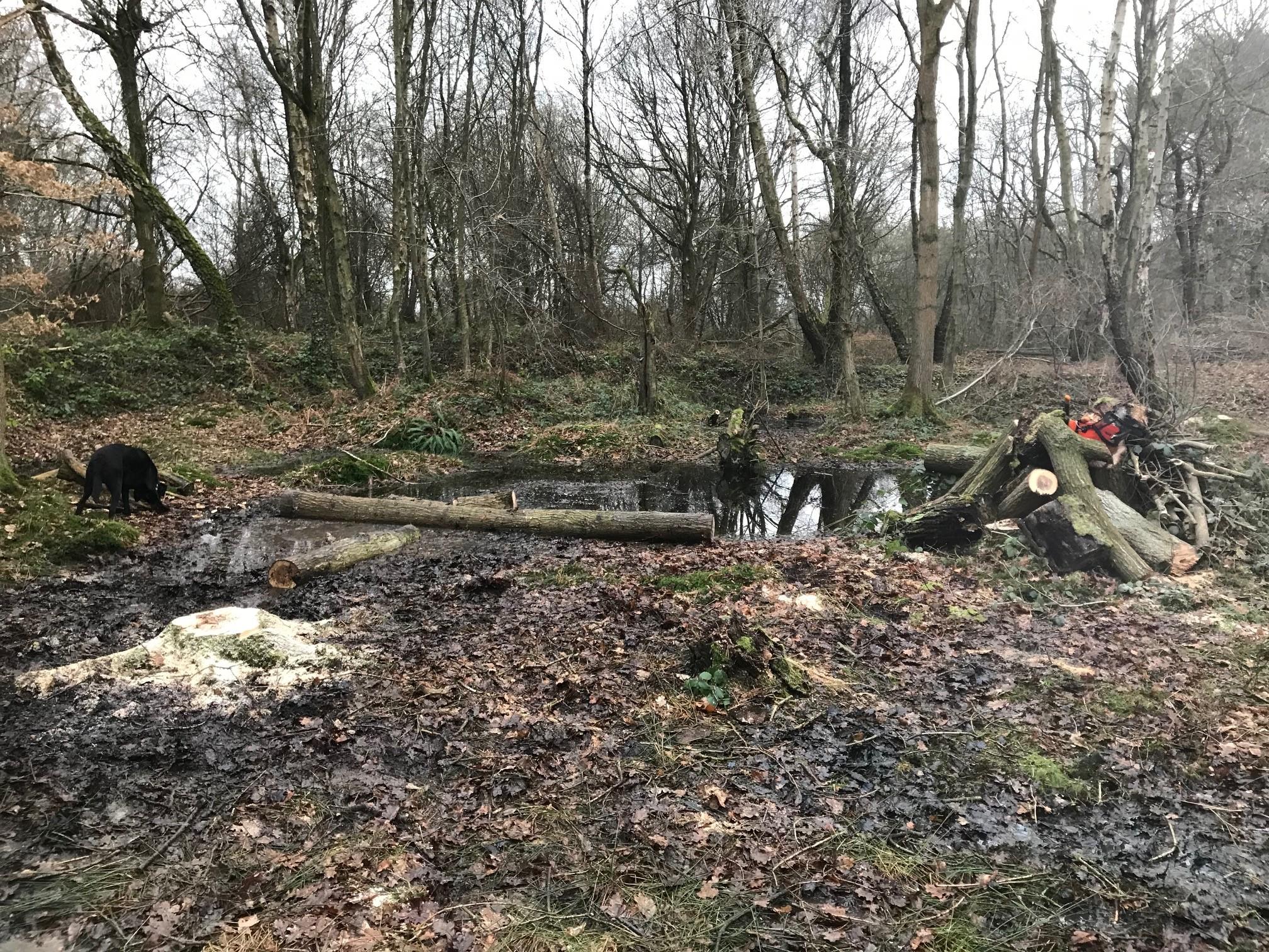 Recreating Acid Wetlands