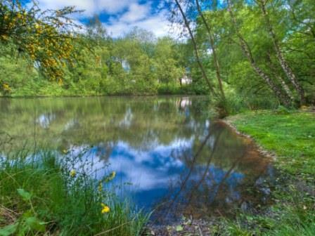 Acid Wetland Ponds on the Nettlebed Commons