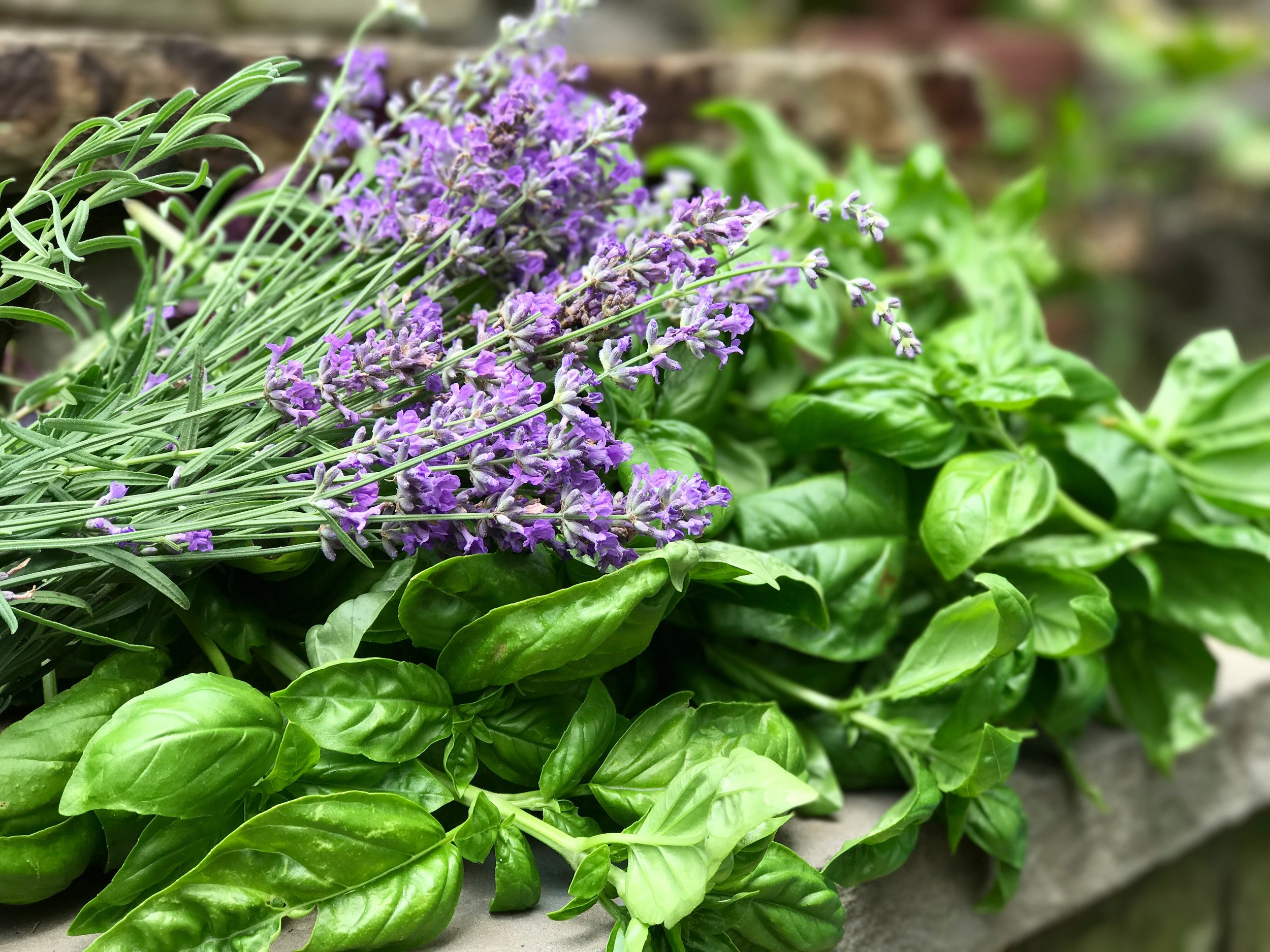 A few of my favorite things... lavender and basil from our garden last year.