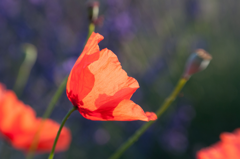 objectsaroundtheworld.com_lavender_other_colour_03.jpg