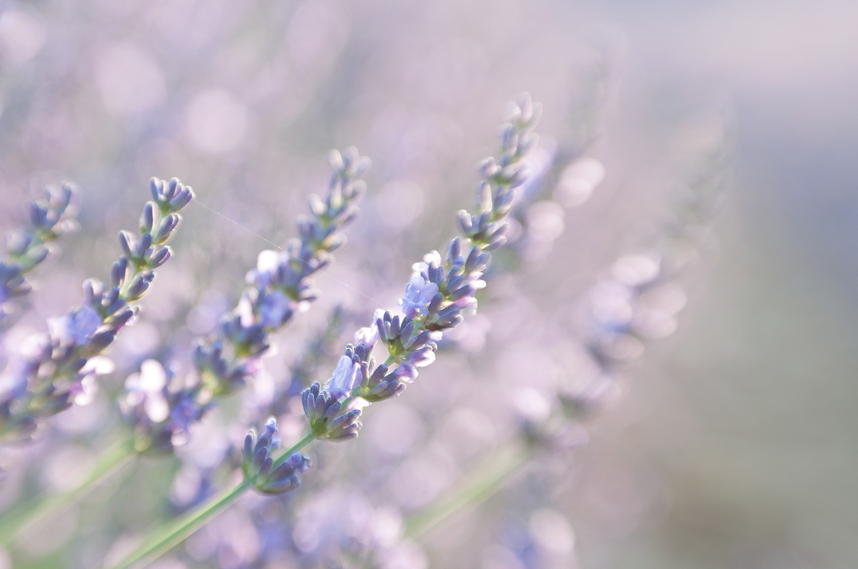 objectsaroundtheworld.com_lavender_other_colour_13.jpg
